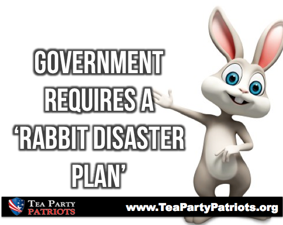 Rabbit disaster